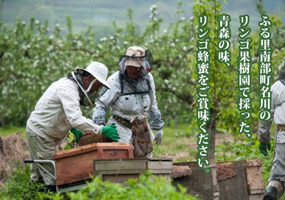 石蔵のリンゴ蜂蜜