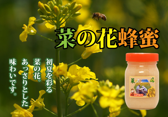 石蔵の菜の花蜂蜜