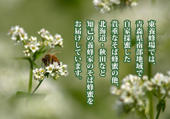 石蔵のそば蜂蜜